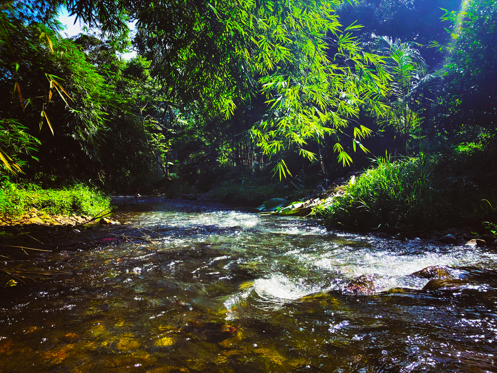 hampala sebarau fishing beautiful fishing spot clear stream water