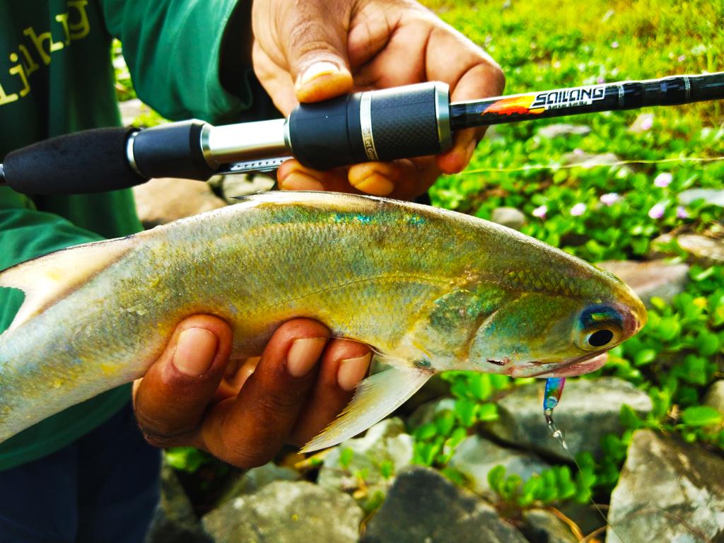 ikan kurau kanicen nix sailang lentok rod ultralight
