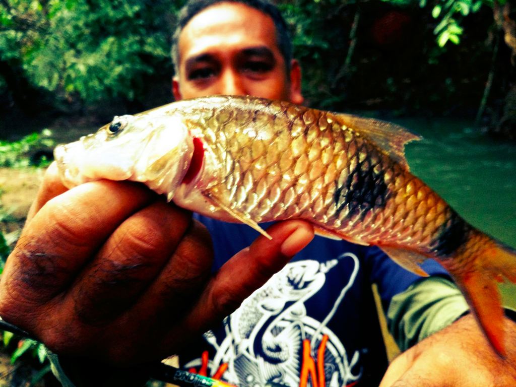 ikan sebarau dua jalus hampala double stripe kanicen nix sailang umpan spoon red eye