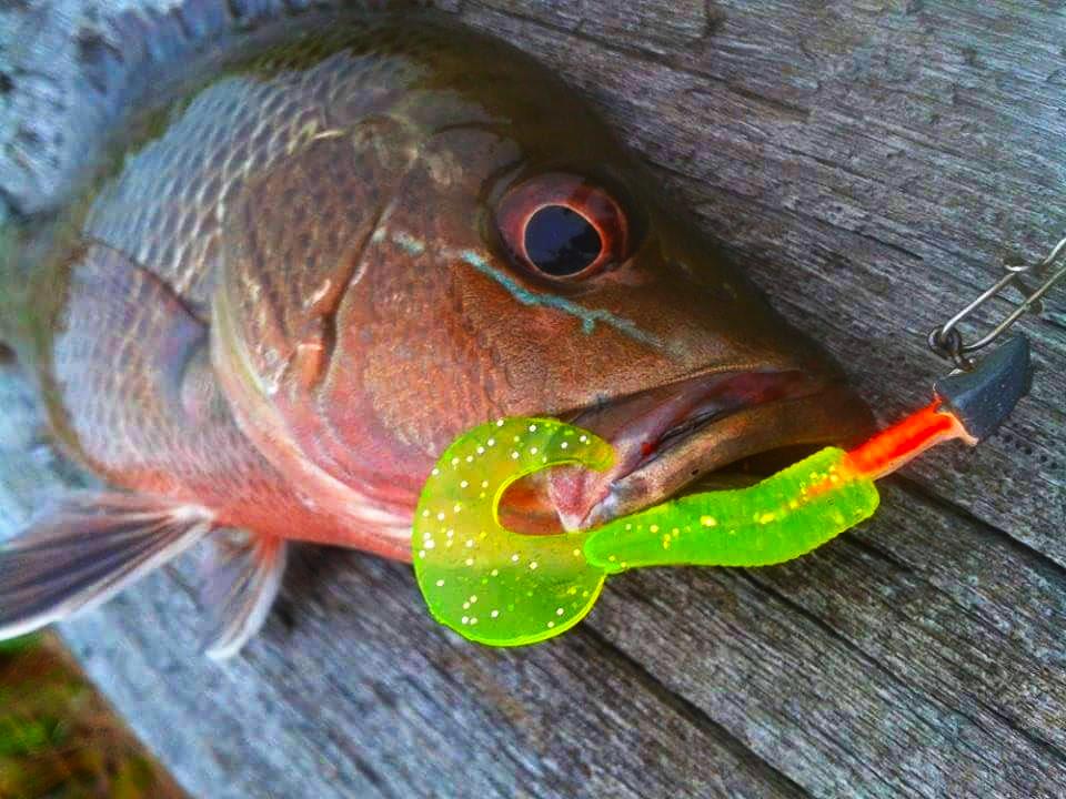 soft bait kanicen nix curly tail fluorescent green memikat MJ Mangrove Jack Siakap Merah