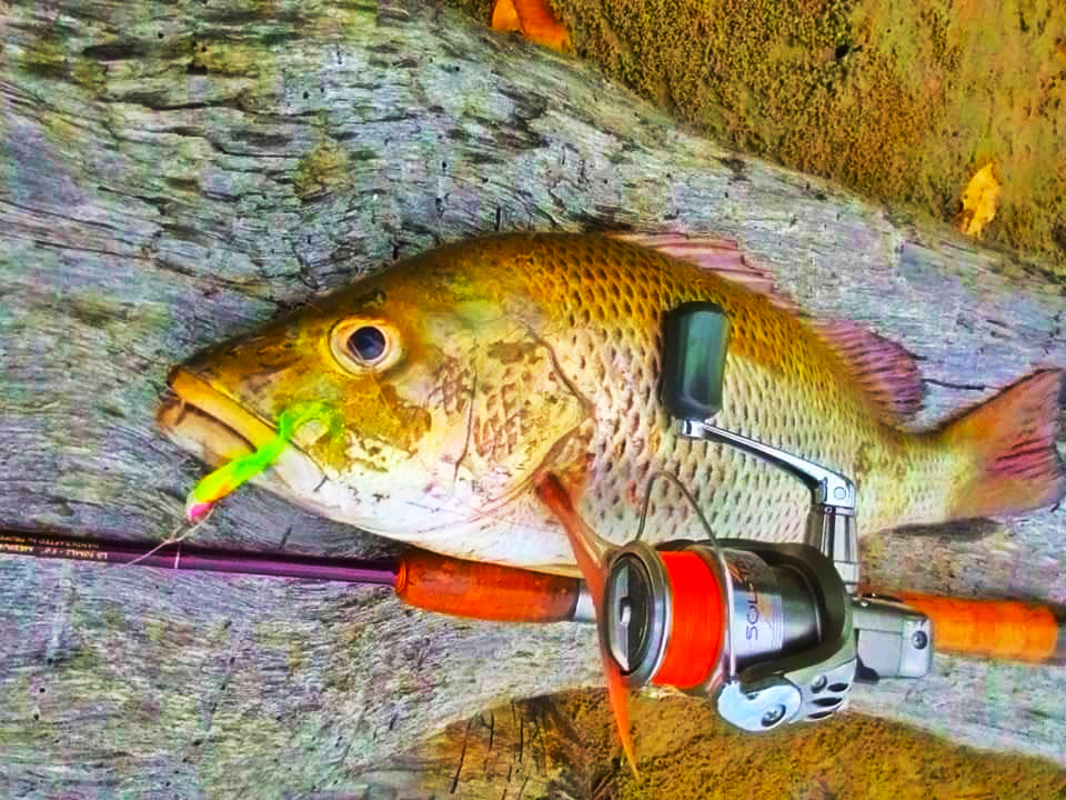 soft bait kanicen nix curly tail fluorescent green strike MJ Mangrove Jack Siakap Merah