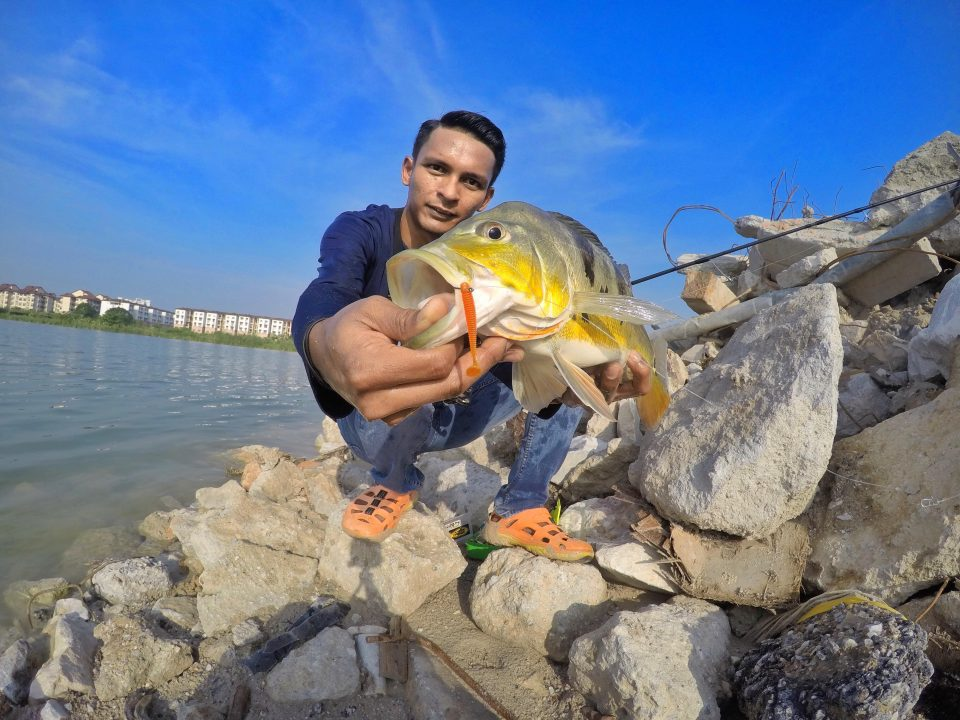wawan-peacock-bass-kanicen-nix-sailang-grenti-strike