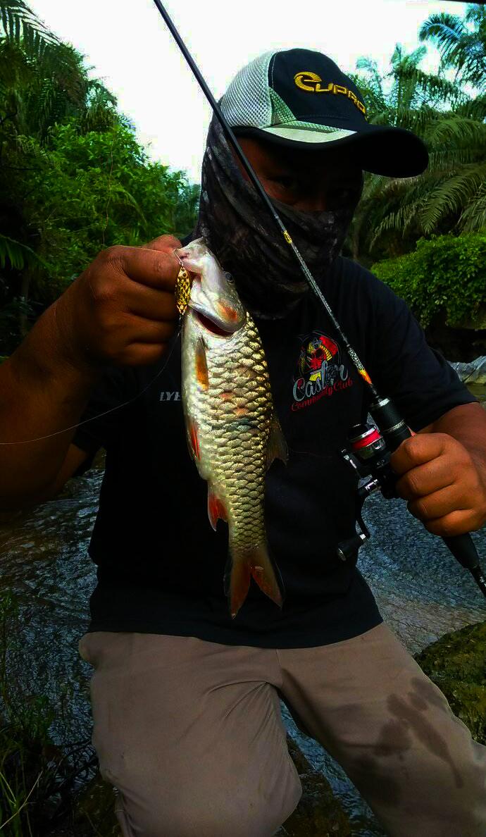 ikan-sebarau-hampala-menggunakan-spoon-kanicen-nix-silau-warna-gold-oleh-lyee-caster