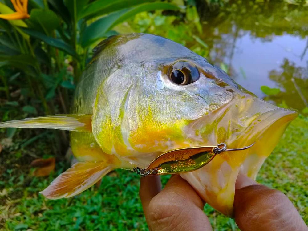 kanicen-nix-geli-geli-softbait-on-ikan-peacock-bass-ikan-raja-by-hairz-zer