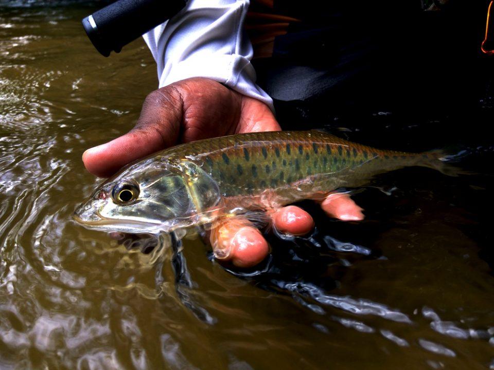 kanicen-nix-grenti-strike-micro-spoon-sikang-burmese-trout-malayan-trout-stream-fishing