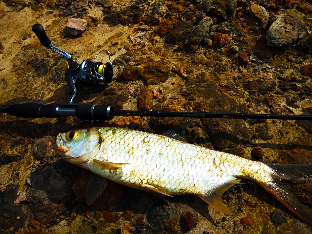 kanicen nix ikan bulan dengan sailang mengajar teknik betul melayan ikan