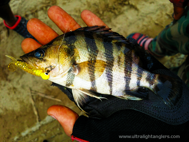 kanicen-nix-using-grenti-strike-softbaits-tiger-fish-muhammad-zafri